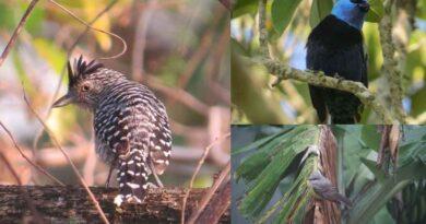 Avistamiento de Aves en San Juan de Rio Seco